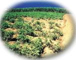 biomas crop